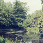 The Wandle at Watermeads, Mitcham, Surrey CR4.
