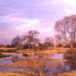 Seven Islands Pond, Mitcham Common, Mitcham, Surrey CR4.