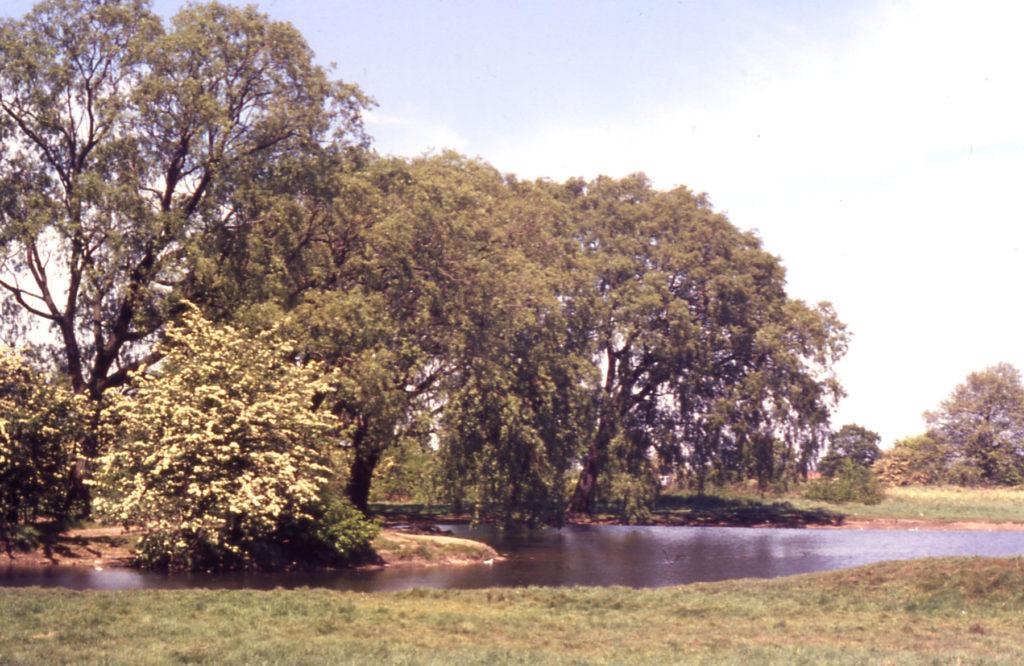 One Island pond, Mitcham Common, Mitcham, Surrey CR4.