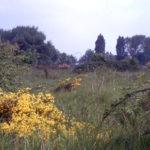 Former gunsite near Croydon Road, Mitcham Common, Mitcham, Surrey CR4.