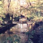 Stream at Mitcham Grove, London Road, Mitcham, Surrey CR4.